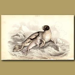 Ocean Seal