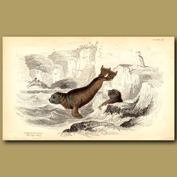 Antique print. Cape Otary