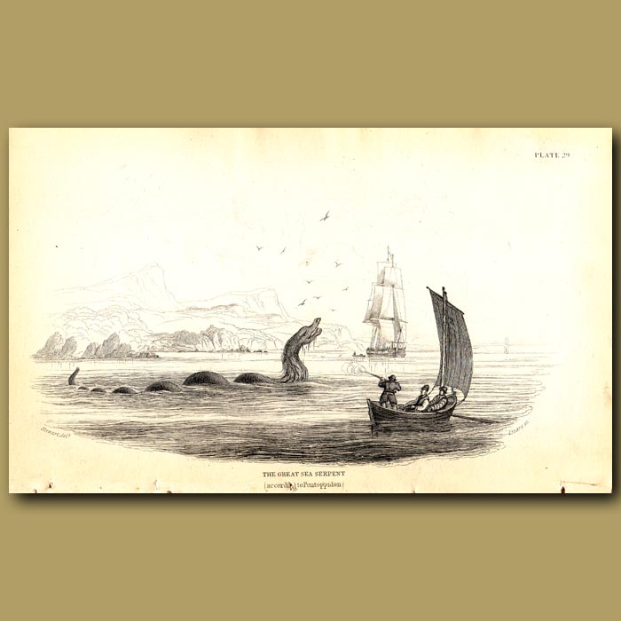 Antique print. The Great Sea Serpent