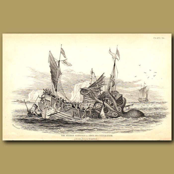 Antique print. The Kraken supposed a Sepia or Cuttlefish
