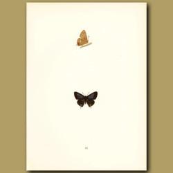 Brighton Argus Butterflies