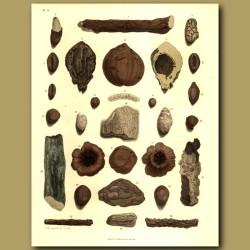 Fossilised (petrified) Wood