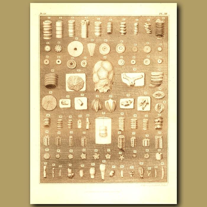 Antique print. Fossil Vertebra From Different Animals