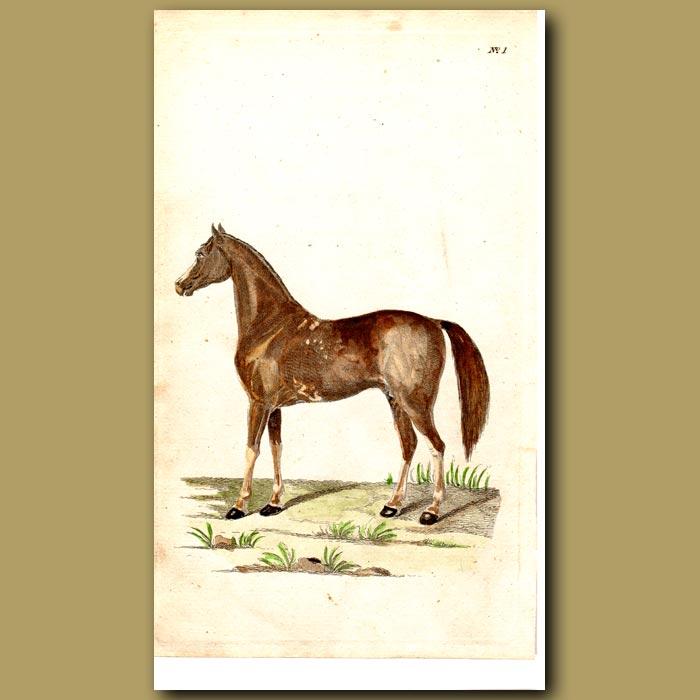 Antique print. Horse