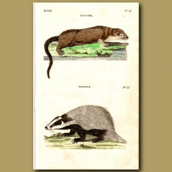 Otter and Badger