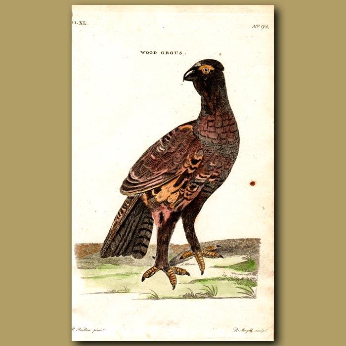 Antique print. Wood Grouse