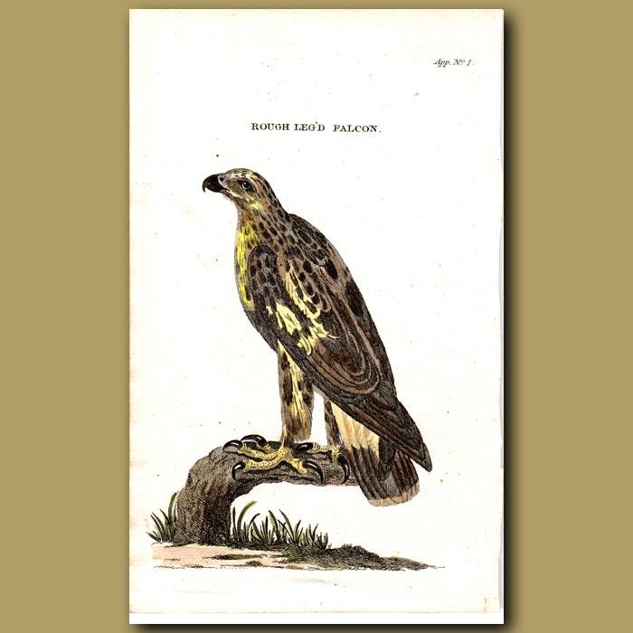 Antique print. Rough legged Falcon
