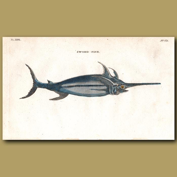 Antique print. Swordfish