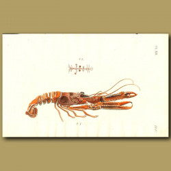 Norway and Atom Lobsters