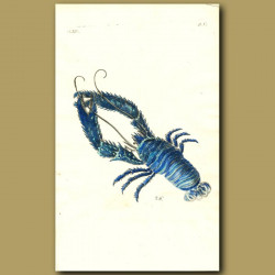 Plated Blue Lobster