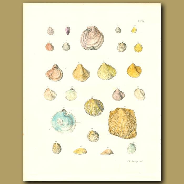 Antique print. Fossil Seashells (Monotis)