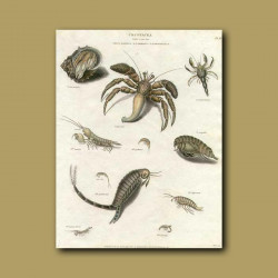 Crabs and shrimps