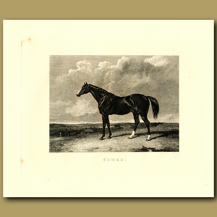 Antique print. Racehorse