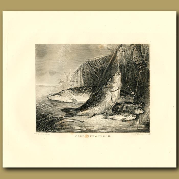 Antique print. Carp, Pike And Perch