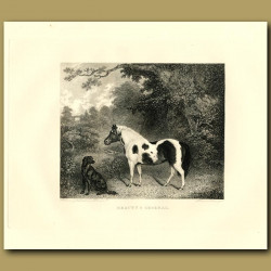 Horse And Dog Under A Tree