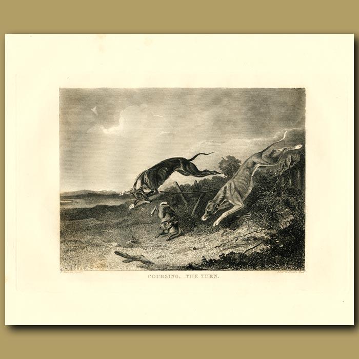 Antique print. Greyhounds