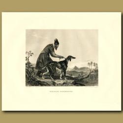Persian Greyhound (Saluki)