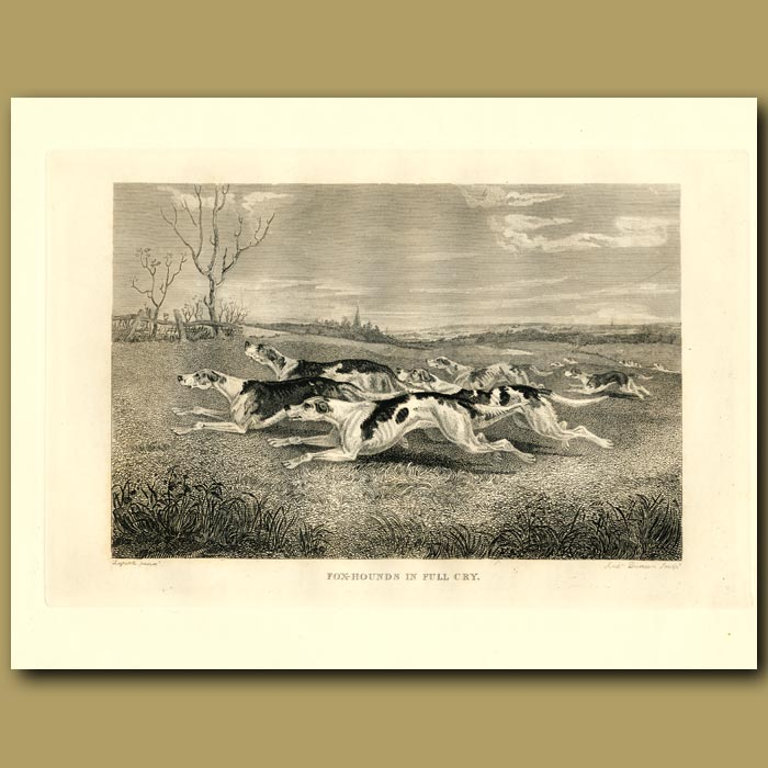 Antique print. Foxhounds In Full Cry