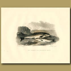 The Common And The Brandling Trout