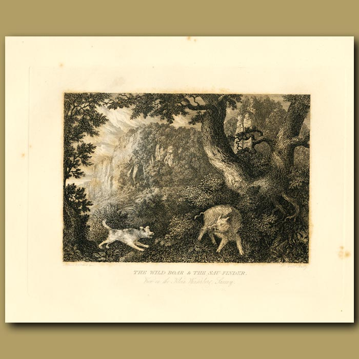 Antique print. The Wild Boar And The Sau-Finder