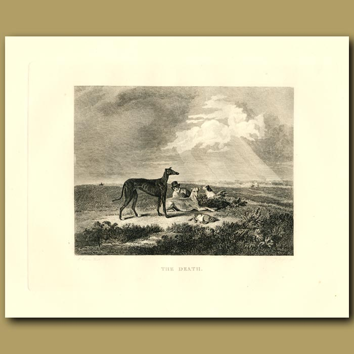 Antique print. Greyhounds And Rabbit