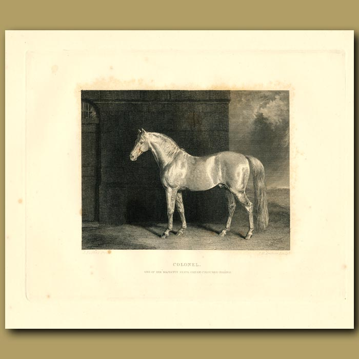 Antique print. Colonel, Hanoverian Horse Used By The Royal Family