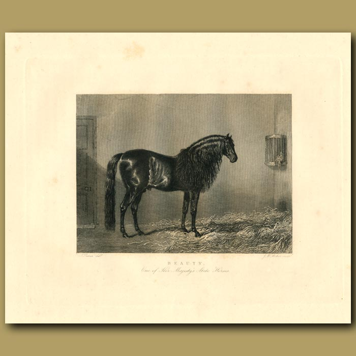 Antique print. Beauty, One Of Her Majesty's State Horses