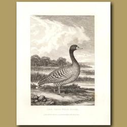 The Grey Wild Goose