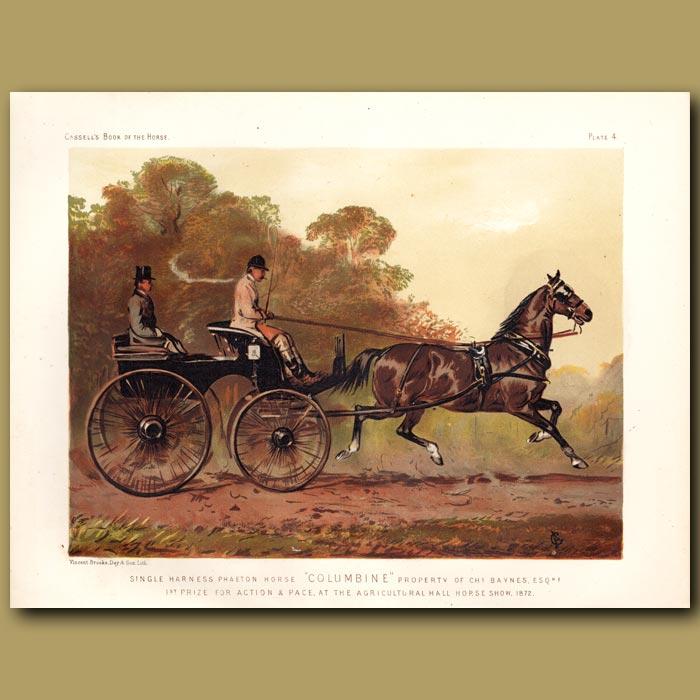 Antique print. Single harness Phaeton horse 'Colombine' Property of Chs. Baynes Esq