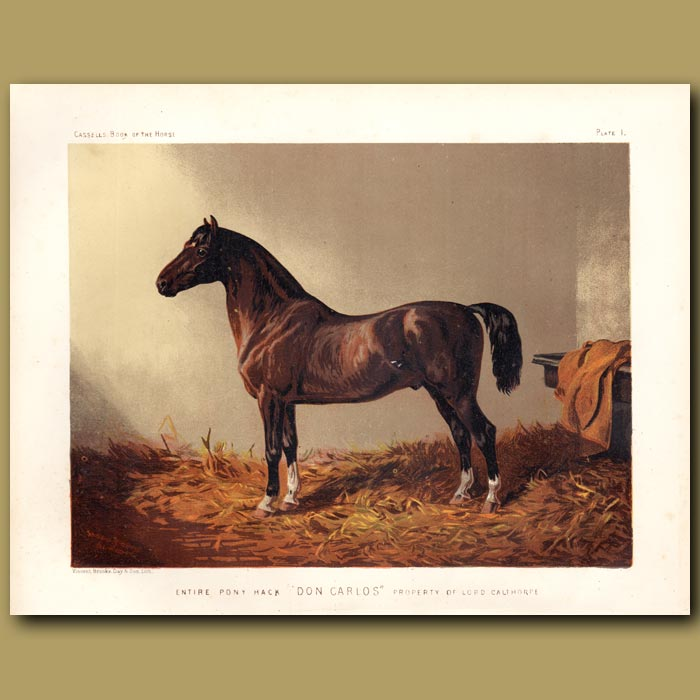Antique print. Entire pony Hack 'Don Carlos' property of Lord Calthorpe