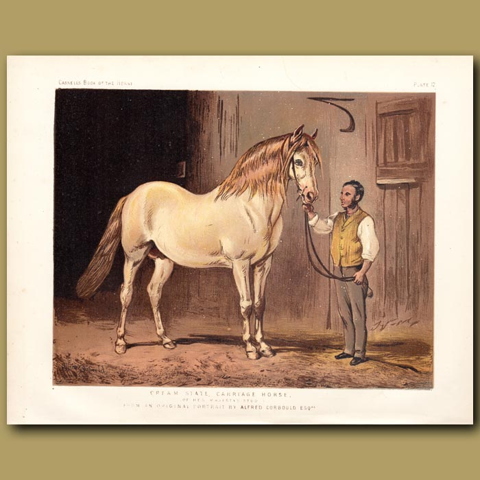 Antique print. Cream State Carriage Horse of Her Majesty's Stud