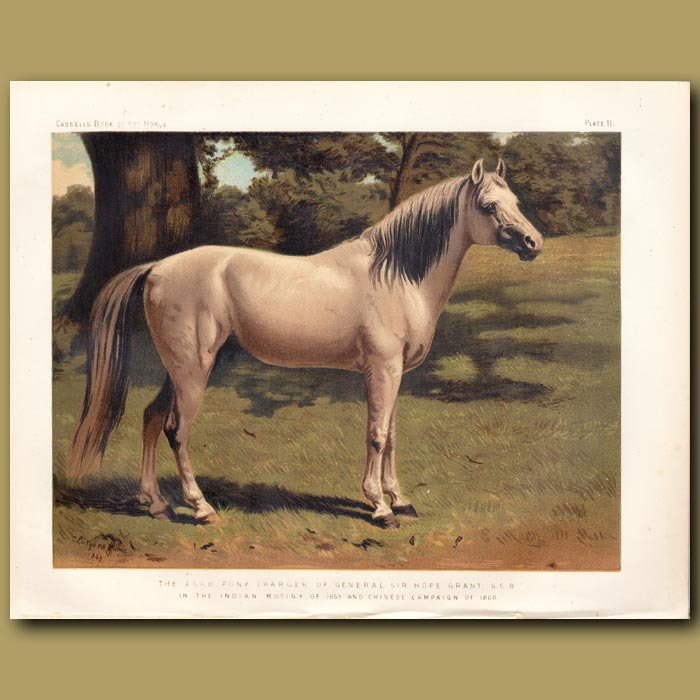 Antique print. The Arab pony Charger of General Sir Hope Grant G.C.B in the Indian Mutiny of 1859 and Chinese Campaign of 1860