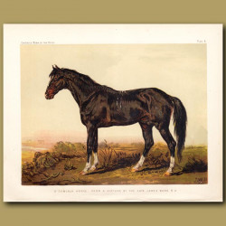 A Dongola Horse From A Picture By The Late James Ward R.A