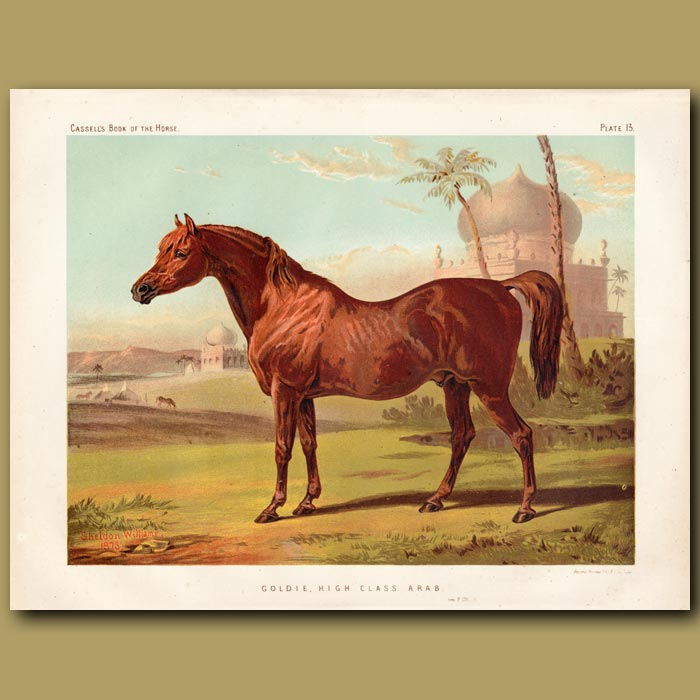 Antique print. Goldie, high class Arab