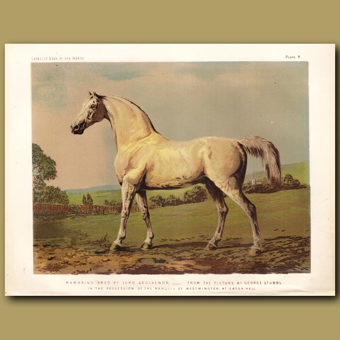 Antique print. Mambrino, bred by Lord Grosvenor