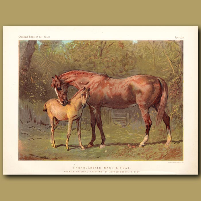 Antique print. Thoroughbred Mare and Foal