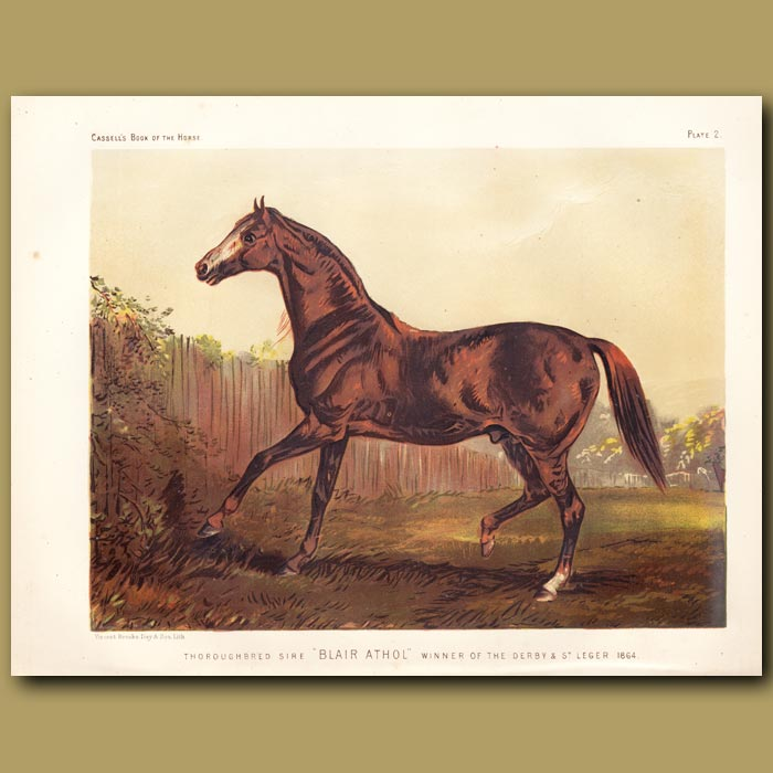Antique print. Thoroughbred Sire 'Blair Athol', winner of the Derby and St. Leger 1864