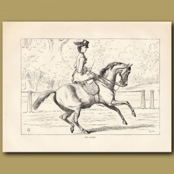The Canter