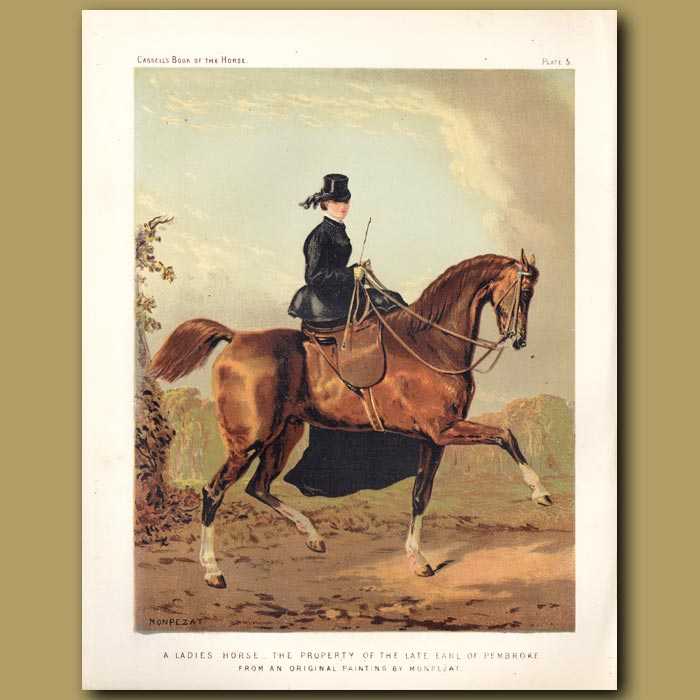 Antique print. A Ladies Horse, the property of the late Earl of Pembroke