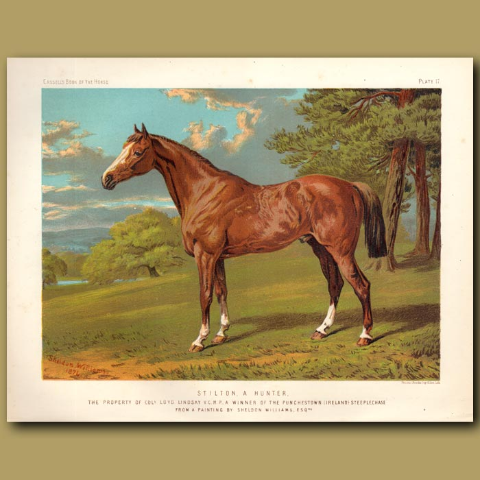 Antique print. Stilton. a hunter. The property of Col. Loyd Lindsay V.C.M.P.A. Winner of the Punchestown (Ireland) Steeplechase