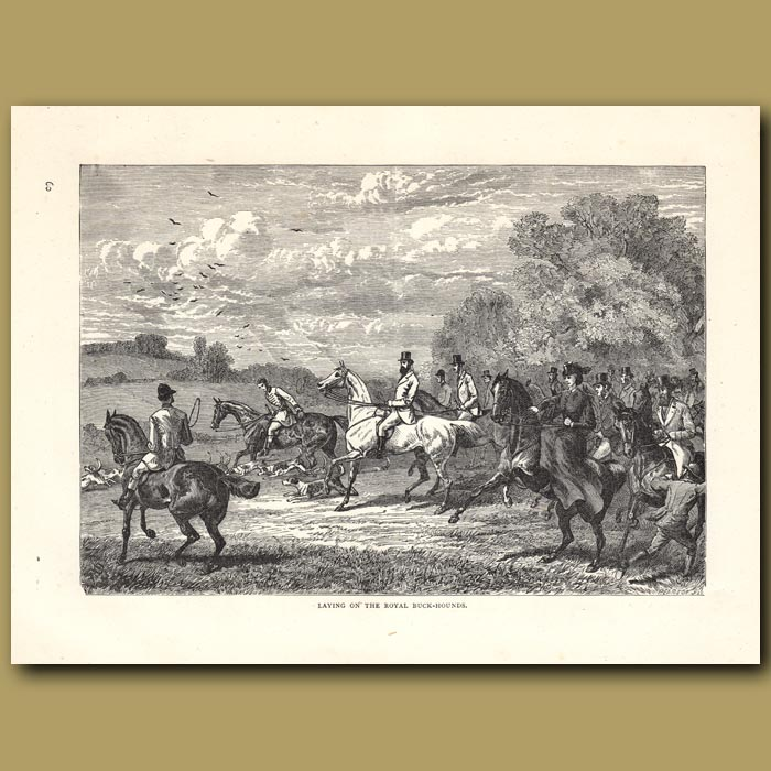 Antique print. Laying on the Royal Buckhounds
