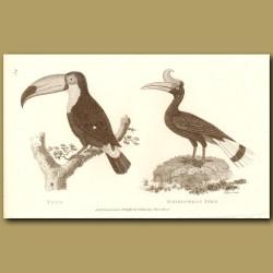 Toucan (Toco) And Rhinoceros Bird