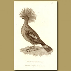 Great Crowned Pigeon