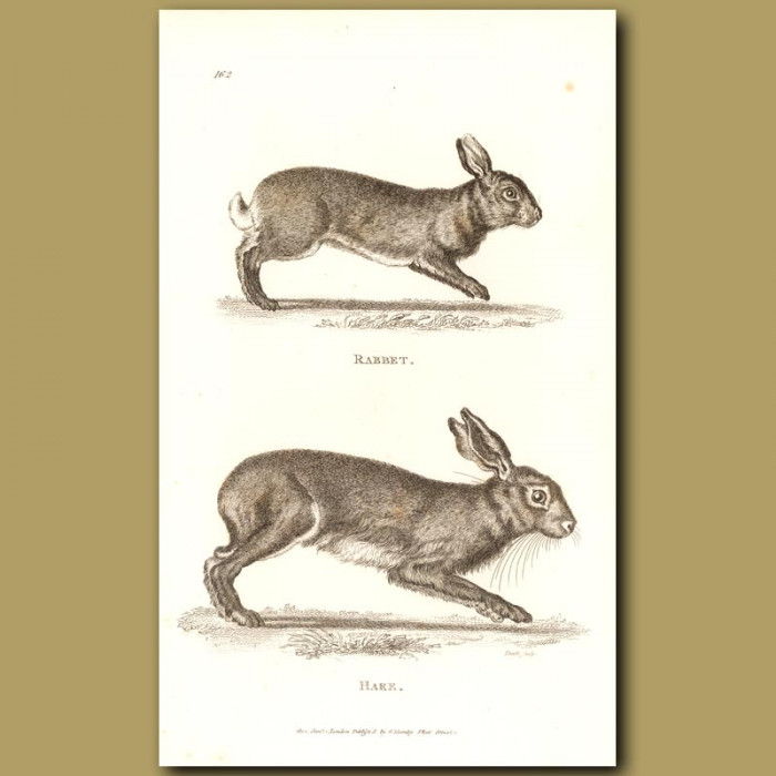 Antique print. Rabbit And Hare