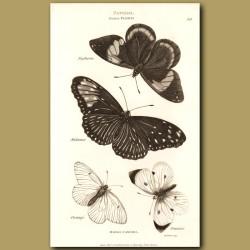 Danai Butterflies