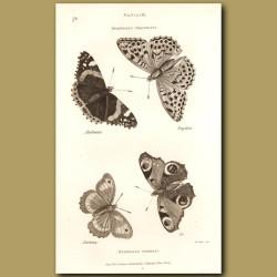 Nymph Butterflies