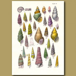 Tower Shells