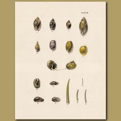 Bubble Snail Shell