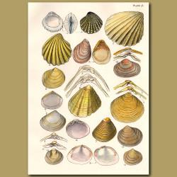 Mollusc and Clam Shells