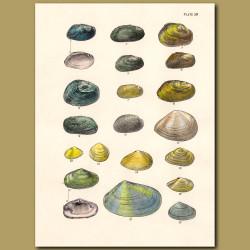 Mollusc and Scallop Shells